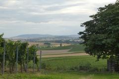 Wandern-Rhein-Main-Ferienwohnung-Rheinhessen